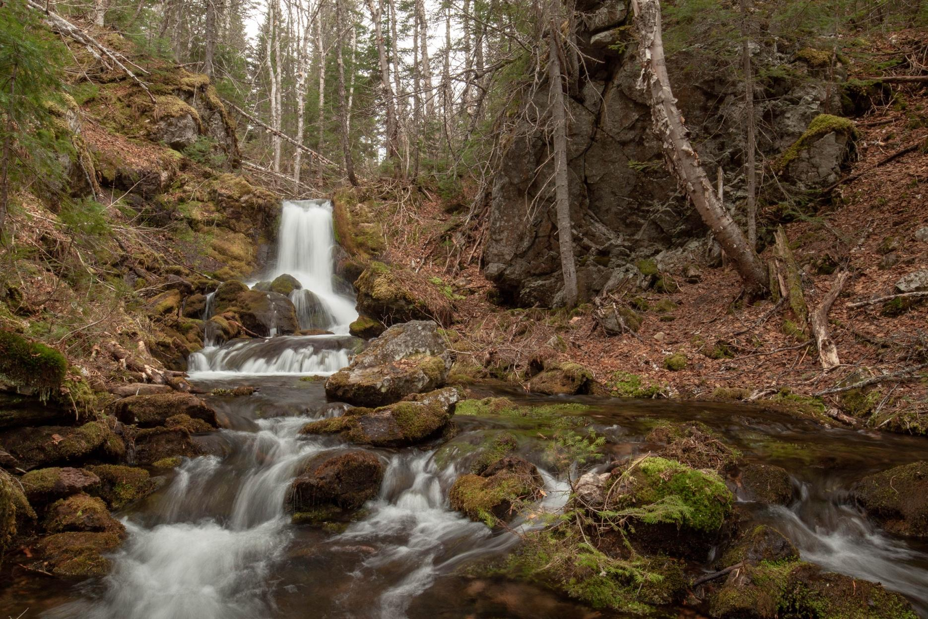 A picture containing nature, outdoor, tree, waterfallDescription automatically generated