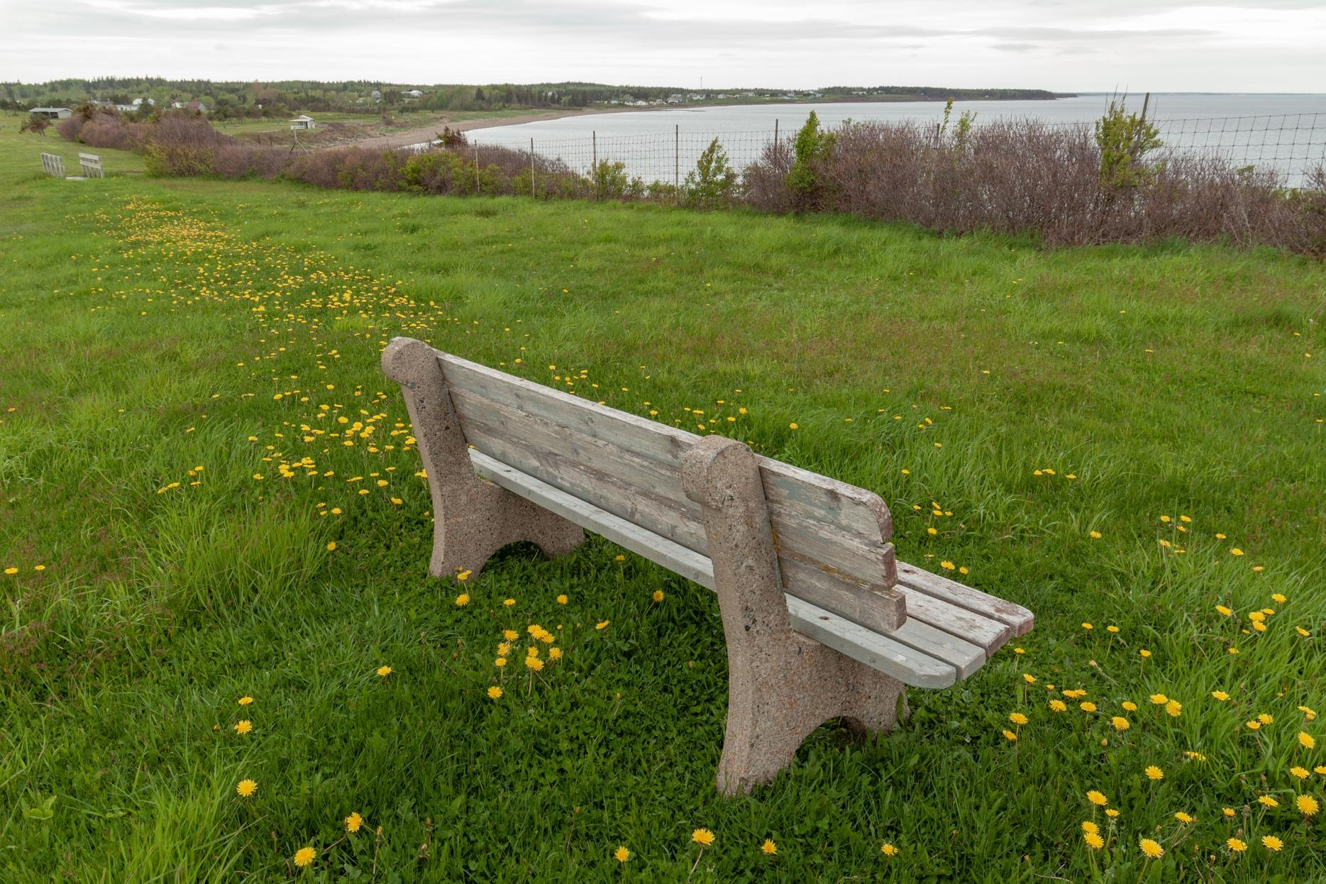 A bench in a grassy fieldDescription automatically generated with medium confidence